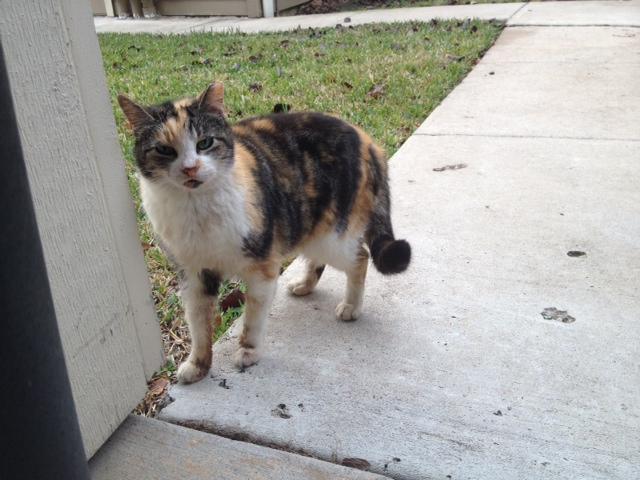 The Starving Homeless Cat